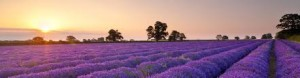 Learn About Essential Oils @ Simply Spirit Reading & Healing Center | Bellingham | Washington | United States
